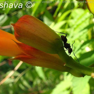 Au jardin de Rochebrune...Dame fourmi