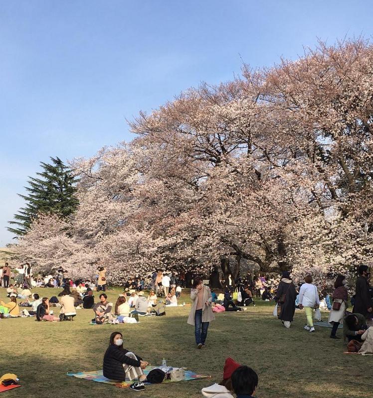 Hanami à Tokyo