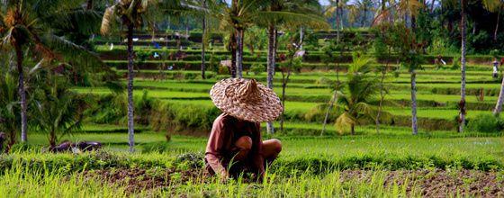 Nourrir les humains sans faire mourrir la terre, l'agroécologie en concurence au modèle institué.