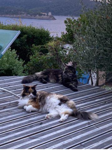 Georgette et Gros Minet sur leur terrasse