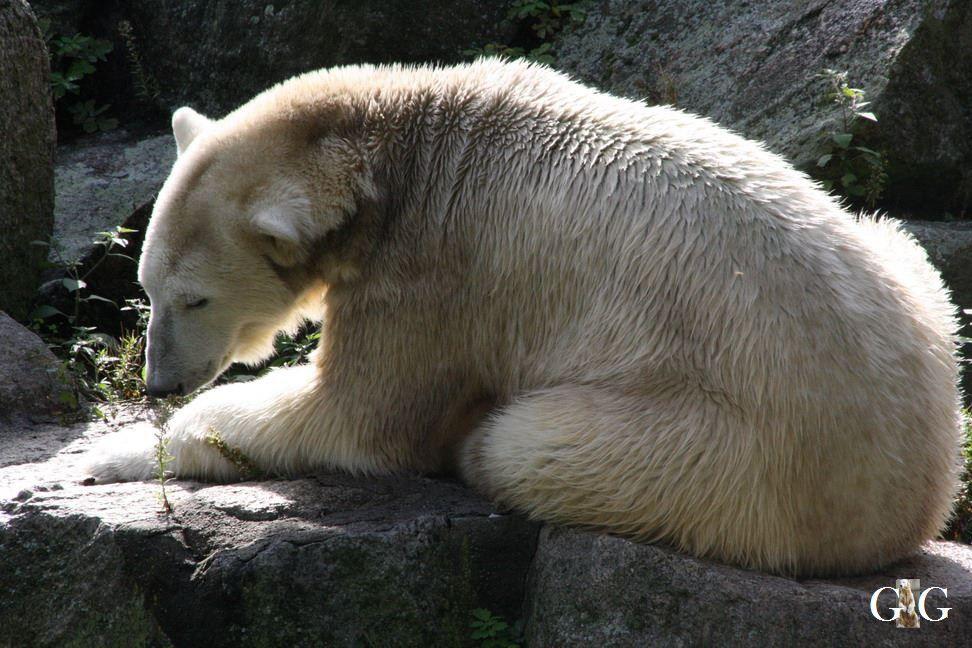 Erinnerung an Knut 2010