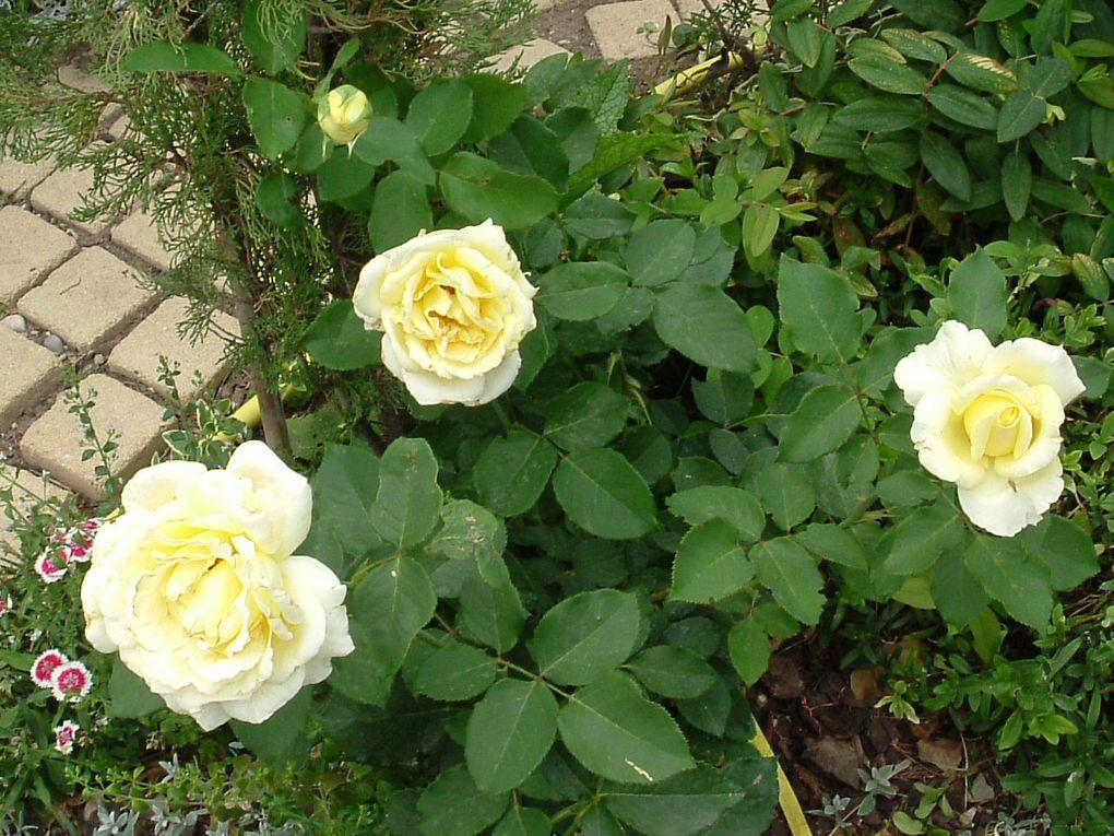 les plantes du Clos fleuri
