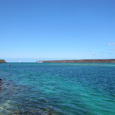 Galapagos J1 to the end : diving & relax, Lovely!!!