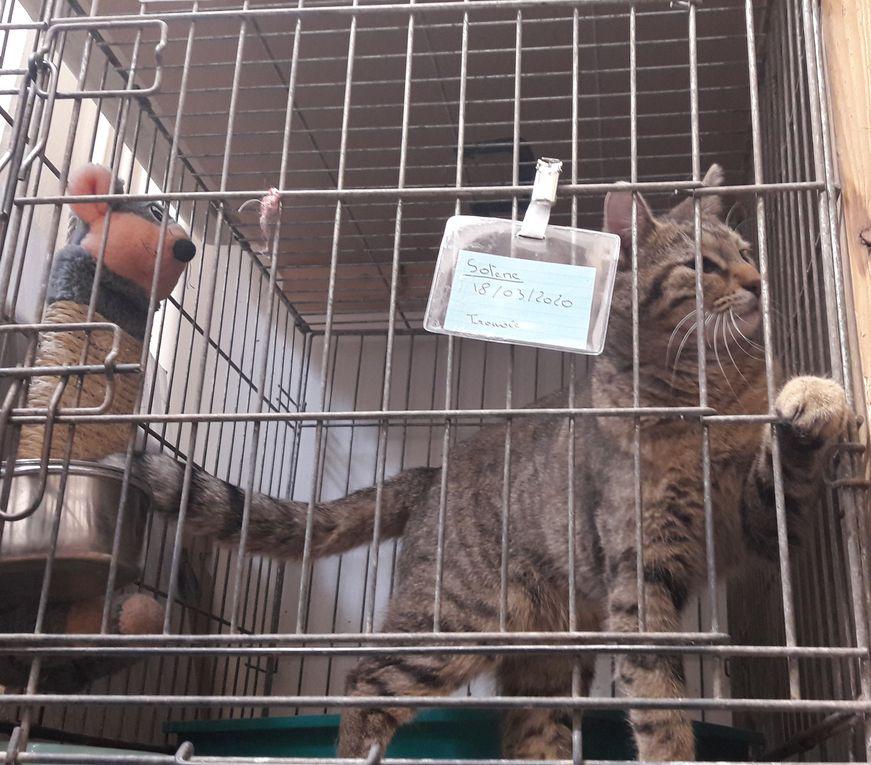 Elle est adoptée !!! : SOLENE, jolie petite tigrée âgée de 7 mois