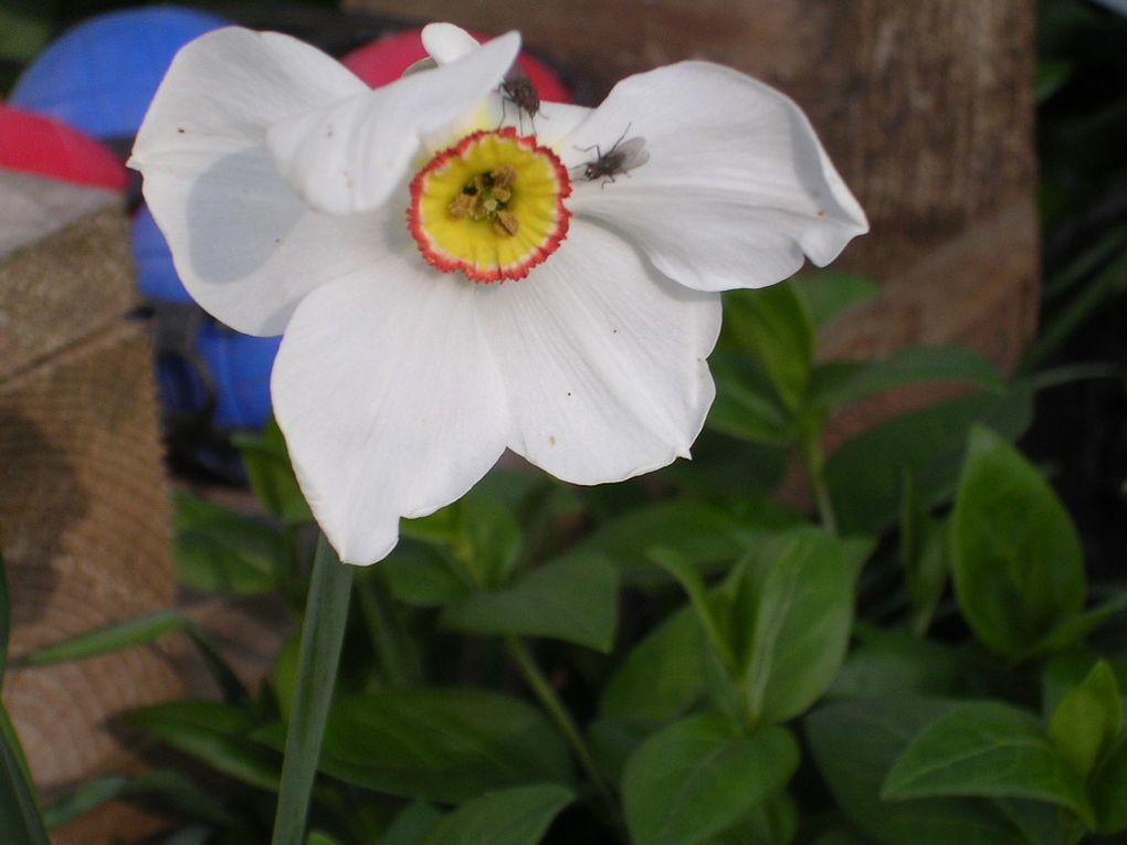 Album - fleurs blanches