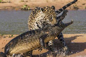 Le règne animal...Deviens le prédateur des prédateurs.