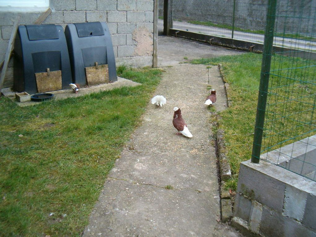 La liberté semble réussir à ces pigeons !