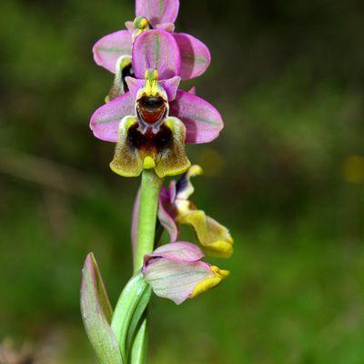 """Duendes del Bosque """"Orquídeas"""""""