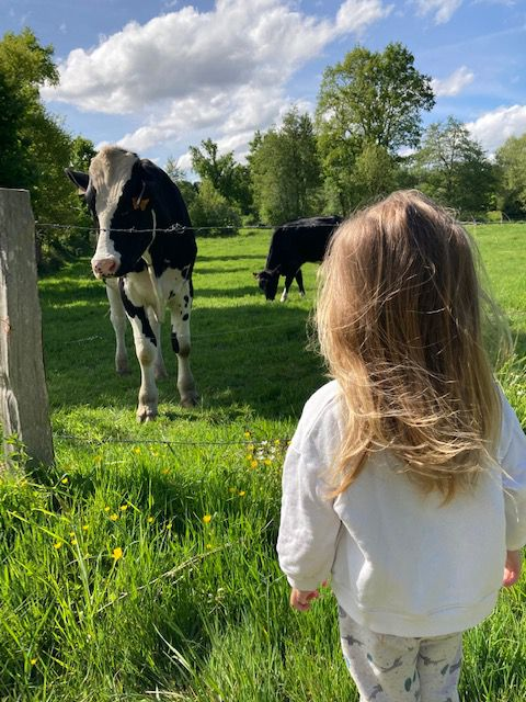 Aller voir les vaches