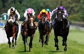 Horse racing, an extreme sports but very interesting