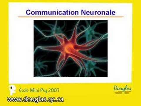 Notre cerveau si fantastique - un cours de Sonia Lupien Ph.D