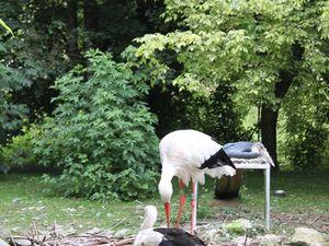 Zoo de Beauval : les oiseaux