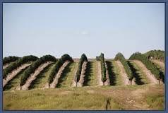 Vineyards in Nebraska