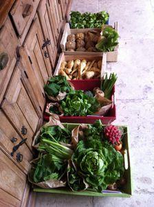 Arrivage des légumes frais cueuillis du jour