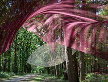 Sous bois en Sologne - Crouy-sur-Cosson 2018