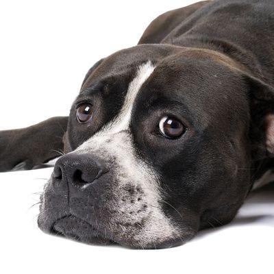 Pensions pour chiens : comment choisir un endroit adapté ?