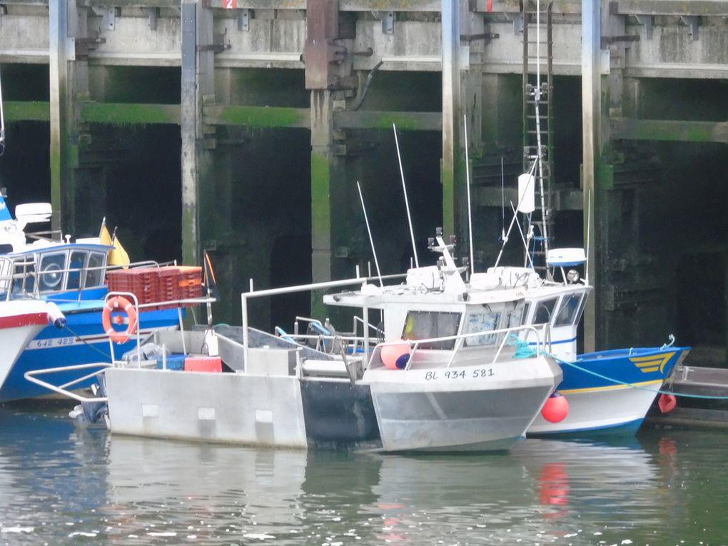 P'tite Crevette  , BL434581 a quai dans le port de Boulogne sur Mer le 23 juin 2019