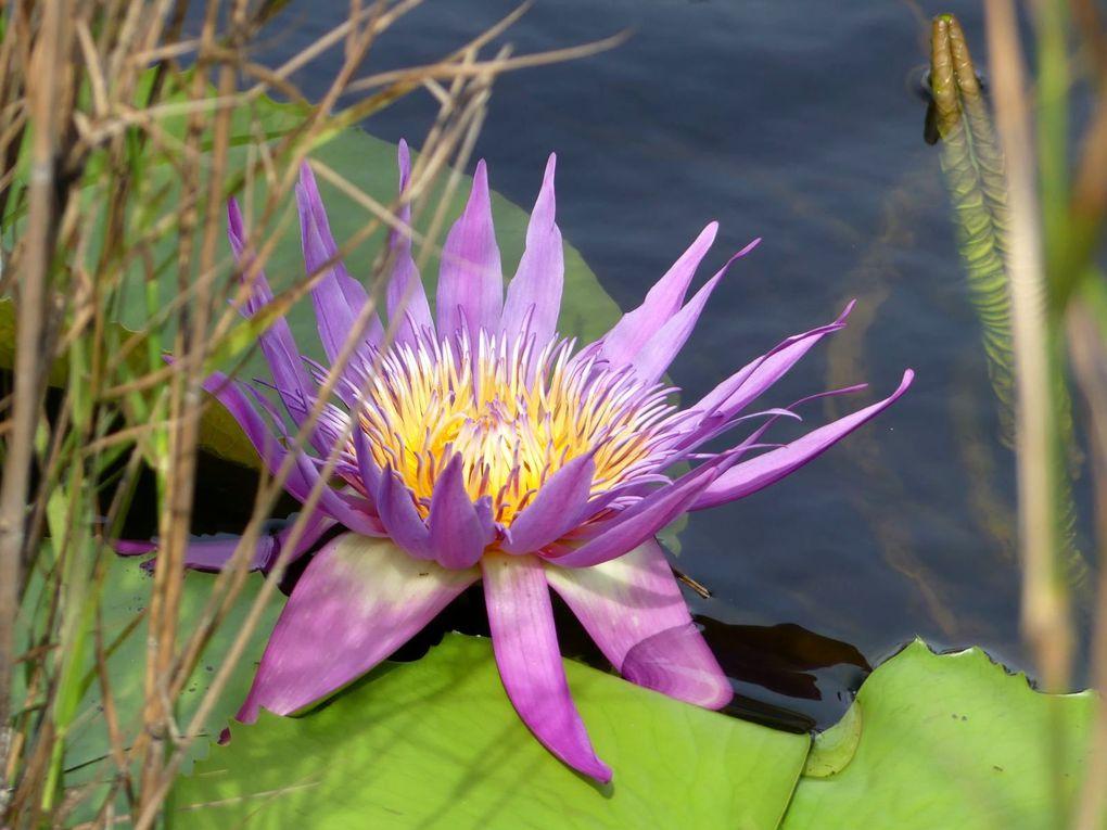 Fleurs du jour (21-23) au Rayong Botanical Garden