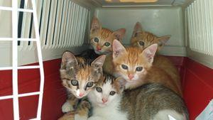 5 chatons de plus récupérés...