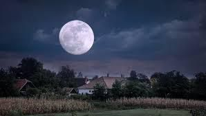 Neil Young/ Harvest Moon...