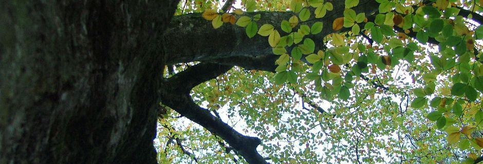 "Brocéliande ""Nature et sens""."