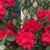 The serial crocheteuses & more n° 590 : fleurs