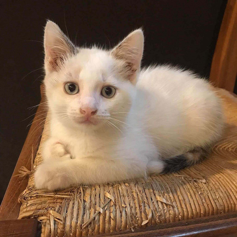 Adoptée : Lili