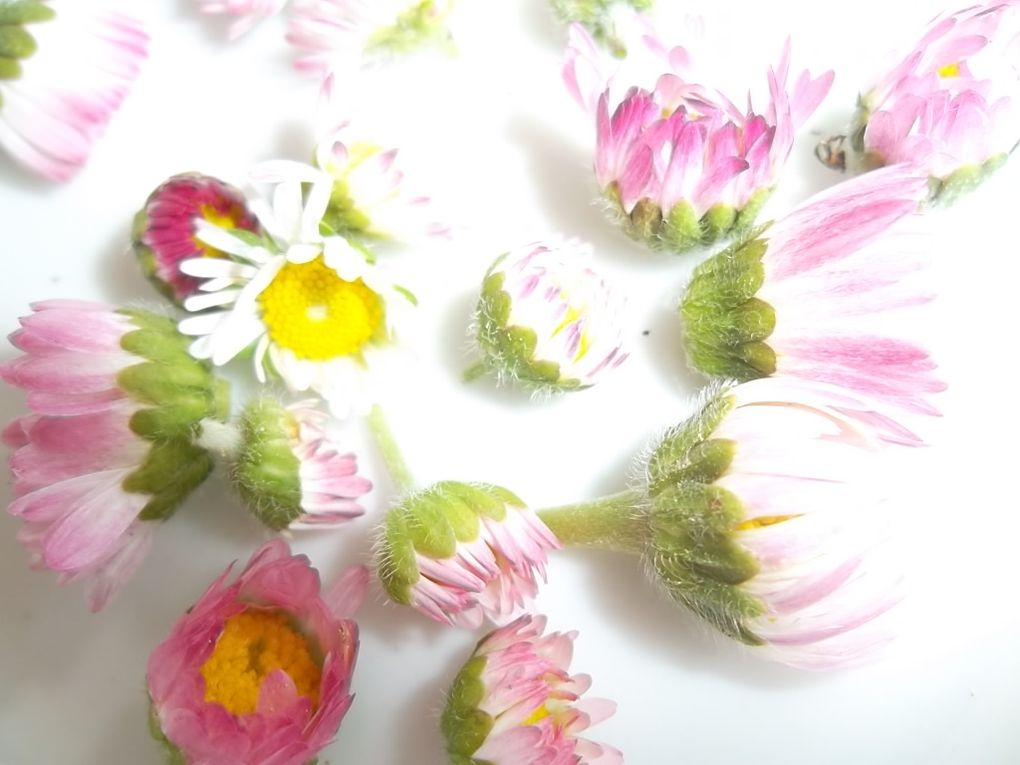 Macérat fleuri : à vous le trio gagnant du printemps !