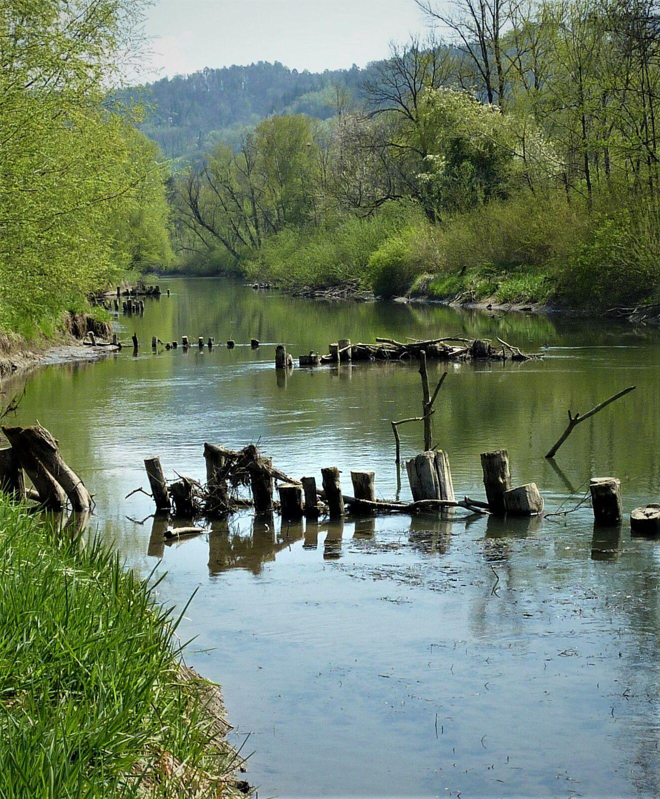 Höchst im Rheindelta