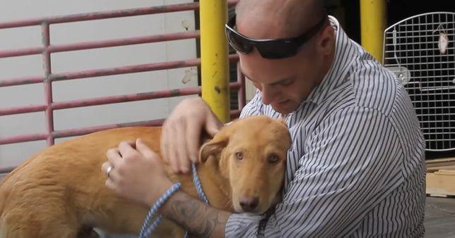 Histoire de Jack qui, à l'exemple de quelque 560 autres chiens, a pu - grâce à la SPCA INTERNATIONAL - rejoindre le soldat américain qui l'avait adopté à des milliers de killomètres de là...