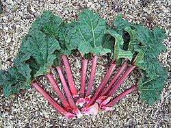 Sorbet Rhubarbe