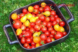 Idées pour cuisiner les Tomates