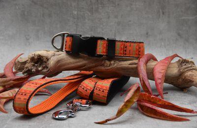 Collier-Laisse couleurs d'automne 25 mm