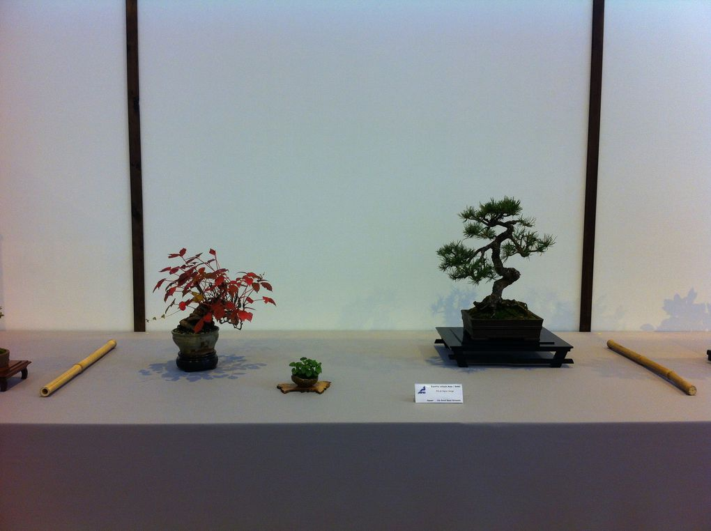 Exposition Nationale de Mame et Shohin