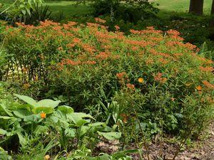 J'ai visité le jardin de Beth Chatto
