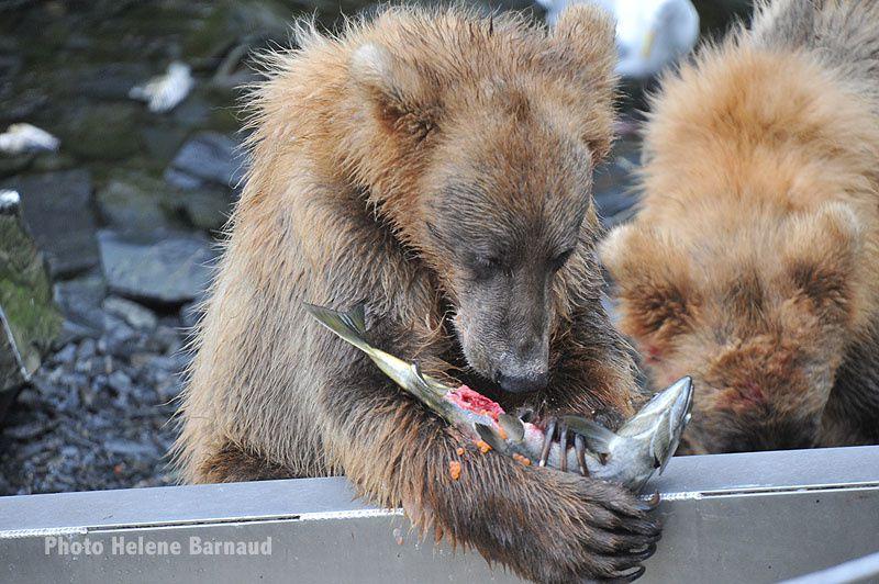 des ours et des ours