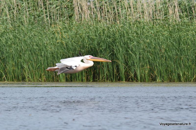 La réserve de biosphère du delta du Danube