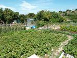 Un jardin au Castellas, un moyen d'avoir jardin et cultures locales