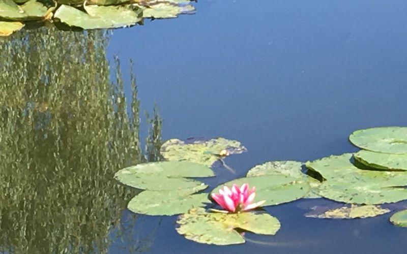 Les jardins de Giverny, source d'inspiration picturale