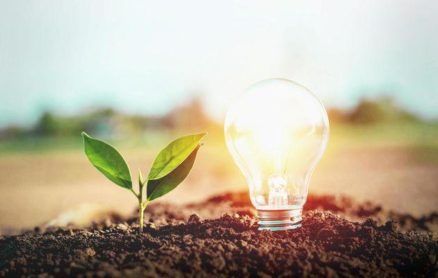 Entreprise éco-friendly : les étapes à suivre !