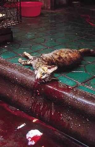 Voilà la civilisation asiatique. Voilà comment on se comporte là-bas avec les animaux. Les individus qui ne respectent pas la vie -quelle qu'elle soit- ne méritent que mépris et de subir la même chose. C'est tout ce que j'ai à dire.