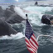 VIDEO. Alaska : deux pêcheurs filment leur rencontre avec un groupe de baleines