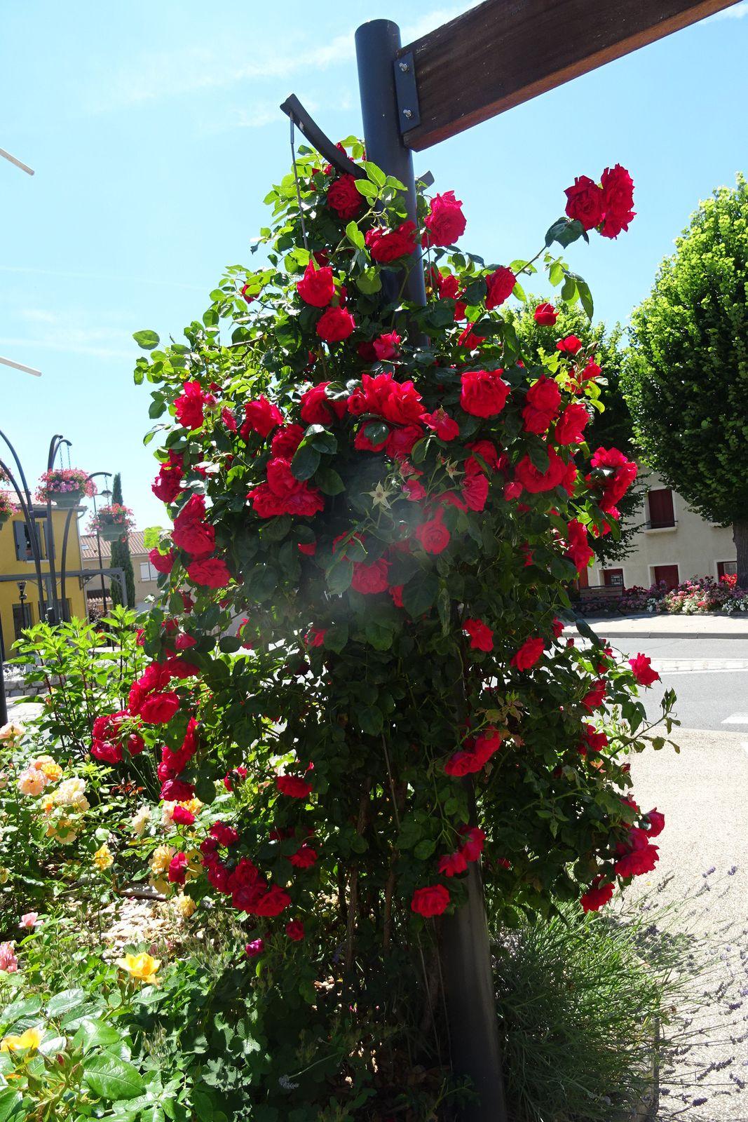 Au retour nous faisons un détour par Chamboeuf, le fleurissement y est exceptionnel.