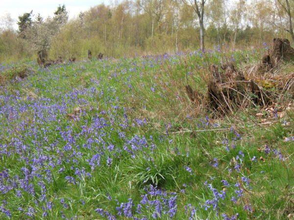 Le Kent au printemps