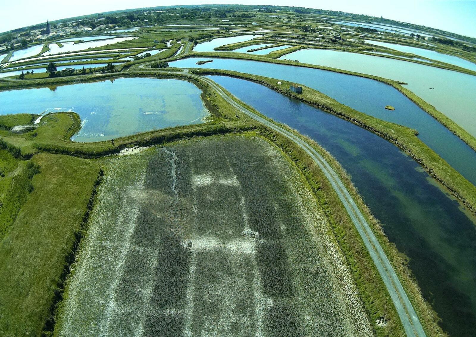 Le marais Cormier et ses salicornes