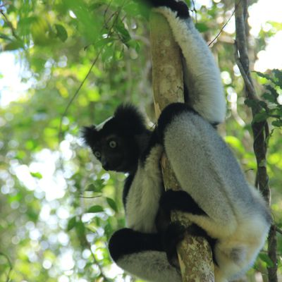 Madagascar: Route Nationale 7, Route Nationale Chouette!! (I/II)