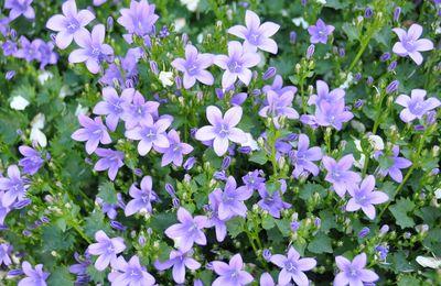 Week end à Barjouville divers photos fleurs Macro et autre le 05 Juin 2010