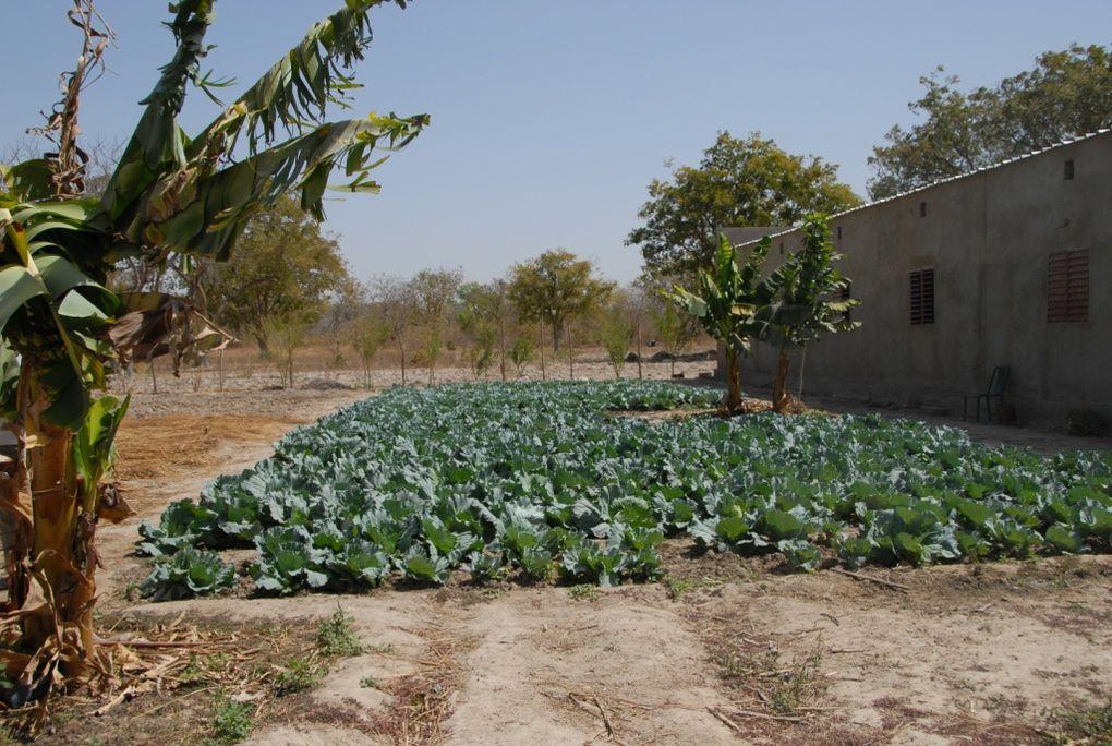 Orphelinat pour adolescents près du Mohoun Burkina Faso