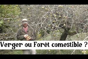 Forêt comestible ou Verger ?