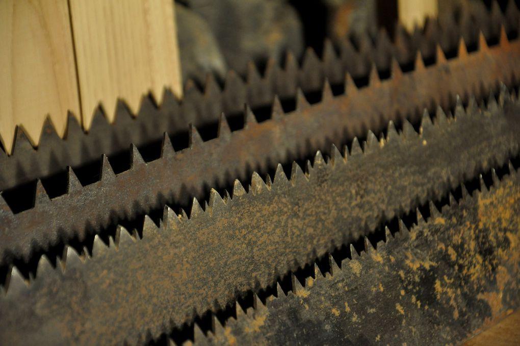 Les scies de longs (4 photos)